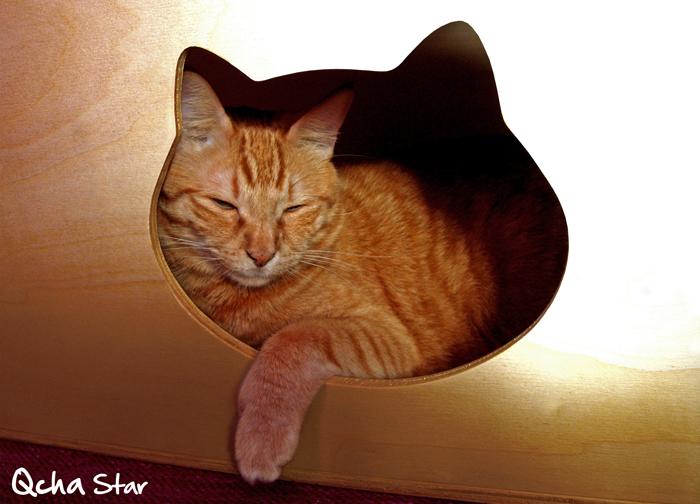 Qcha star cuccia per gatto cucce cani e gatti - Cuccia per gatti ikea ...